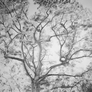 le vent dans les branches