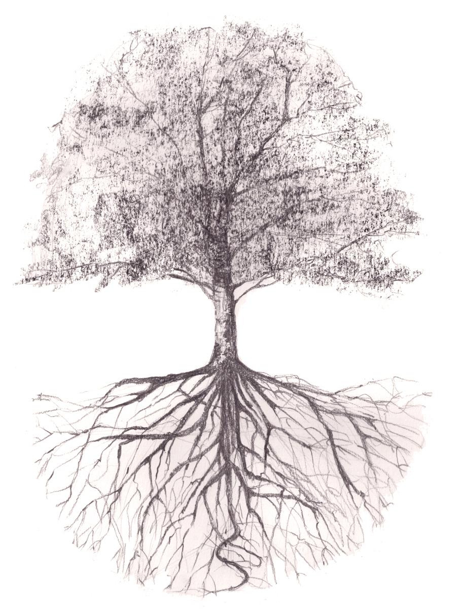 Arbre Avec Racine racines · mes arbres